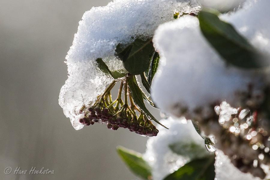 Sneeuw close-up
